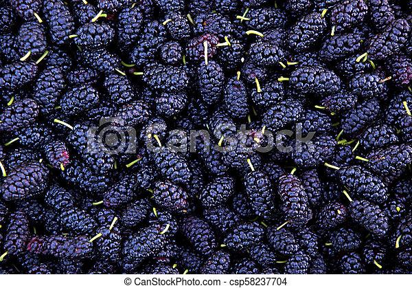 Ripe mulberry berries - csp58237704
