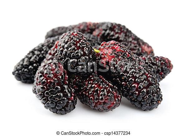 Ripe mulberry - csp14377234