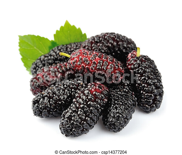 Ripe mulberry with leaves - csp14377204