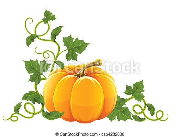 ripe orange pumpkin vegetable with  - csp4282030
