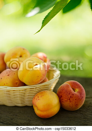 Ripe Tasty Apricots in the Basket on the Old Wooden Table - csp15033612