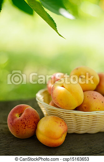 Ripe Tasty Apricots in the Basket on the Old Wooden Table - csp15163653