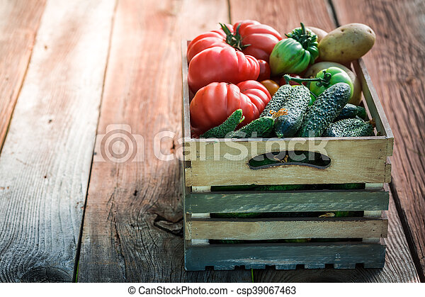 Ripe tomatoes and cucumbers in greenhouse - csp39067463