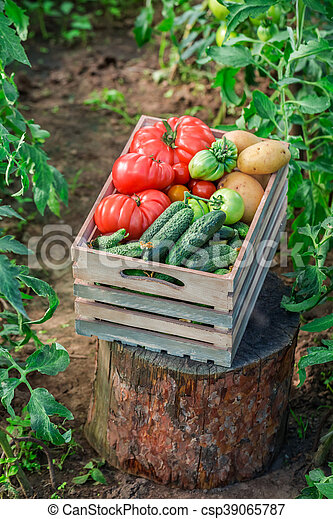 Ripe tomatoes and cucumbers to groceries - csp39065787