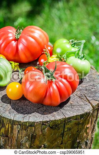 Ripe tomatoes in garden - csp39065951