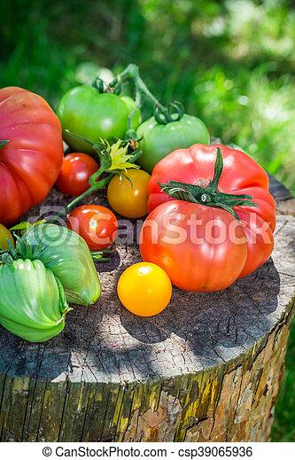 Ripe tomatoes in garden - csp39065936