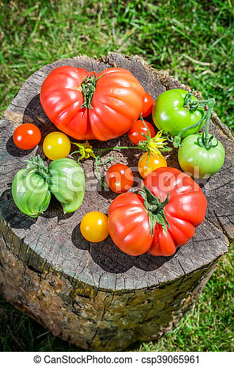 Ripe tomatoes in the countryside - csp39065961