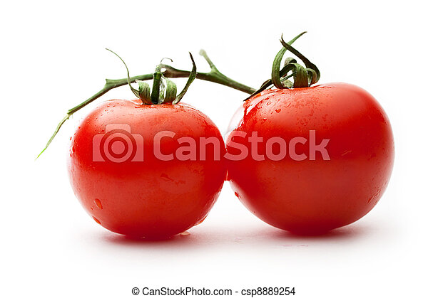 Ripe tomatoes on a branch - csp8889254