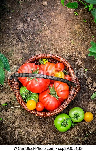 Ripe tomatoes on ground - csp39065132