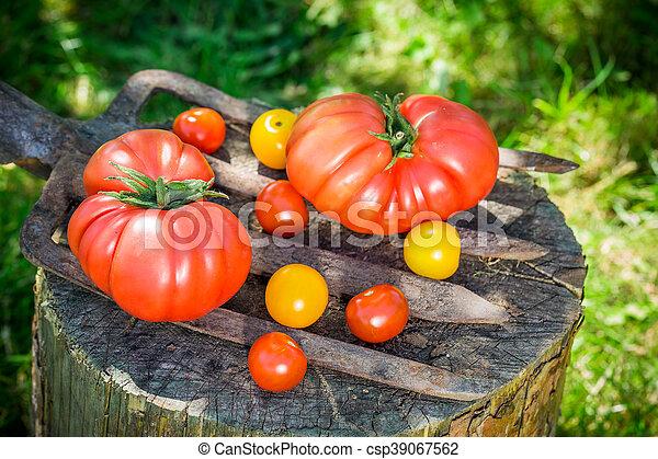 Ripe tomatoes - csp39067562