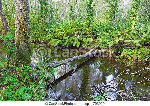 river in beautiful forest - csp11793920