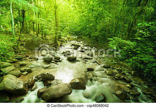 River in jungle - csp48068042