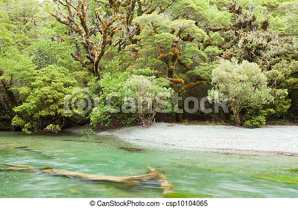 River in rainforest wilderness of Fiordland NP NZ - csp10104065