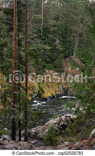 River in the forest - csp52558783