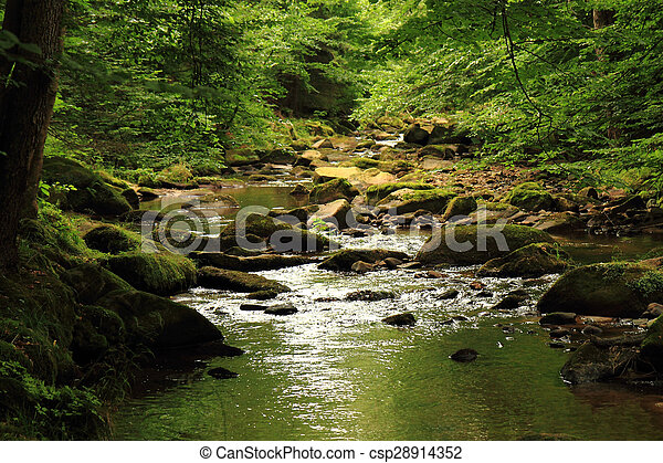 river in the forest - csp28914352