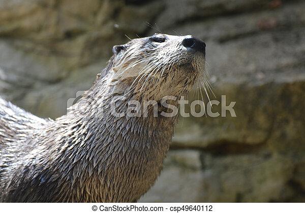 River Otter - csp49640112