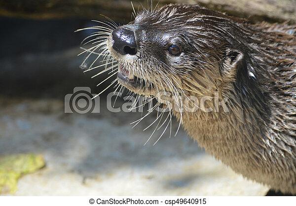 River Otter - csp49640915