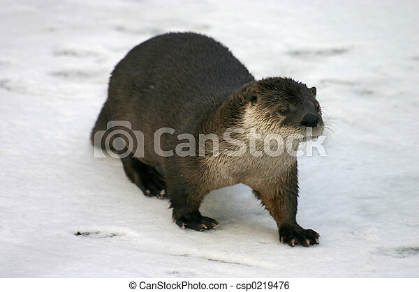 River Otter - csp0219476