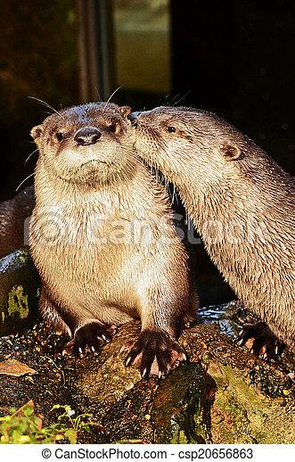 River otter - csp20656863