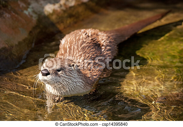 River otter - csp14395840