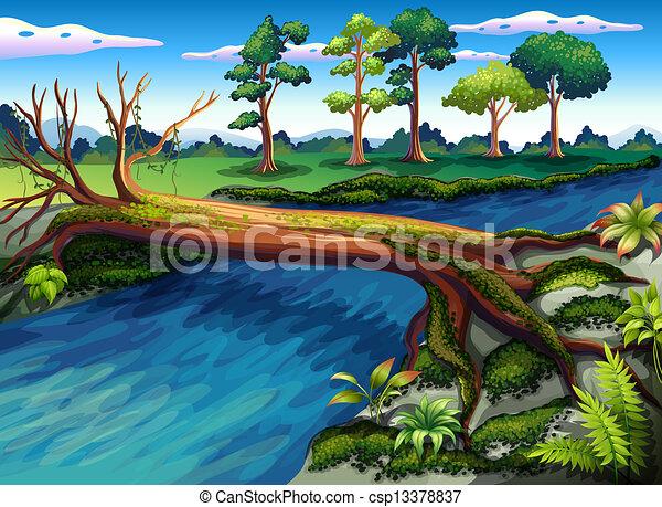 rivière, arbre, algues - csp13378837