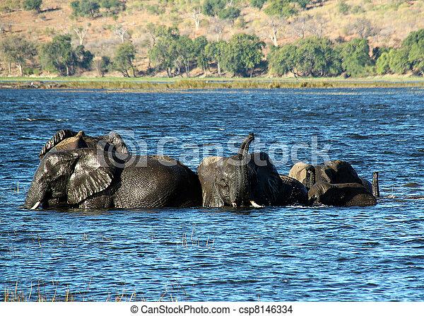 rivière, chobe, baigner, botswana, éléphants - csp8146334