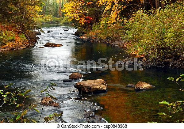 rivière, forêt, automne - csp0848368