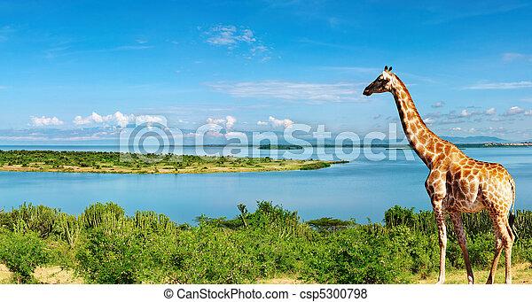 rivière, nil, ouganda - csp5300798