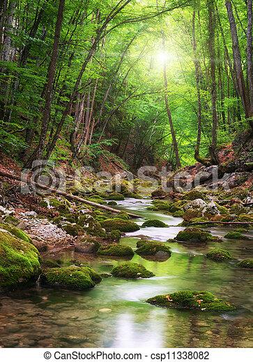 rivière, profond, forêt, montagne - csp11338082