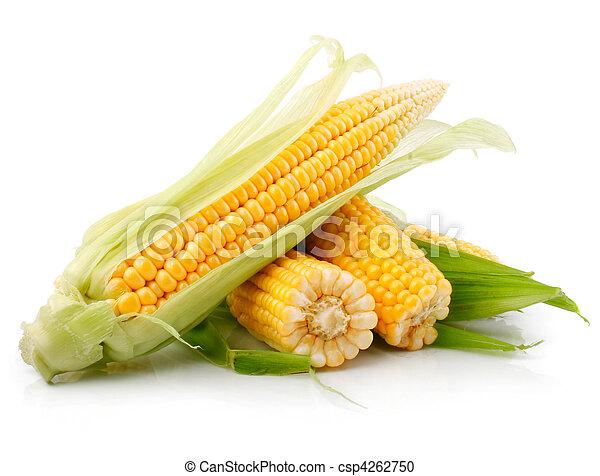 roślina, świeży, nagniotek, zielone listowie - csp4262750