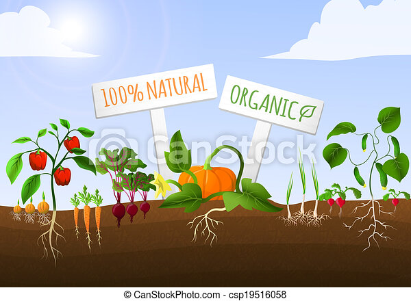 roślina, afisz, ogród - csp19516058