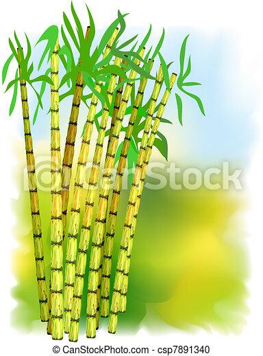roślina, cane., cukier - csp7891340