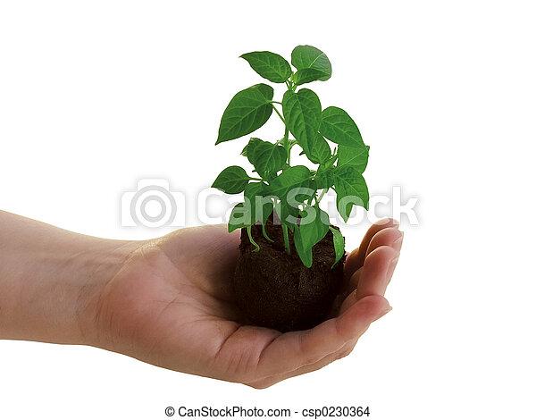 roślina, ręka - csp0230364