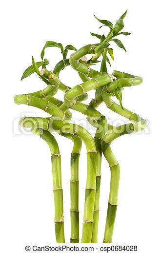 rośliny, bambus - csp0684028