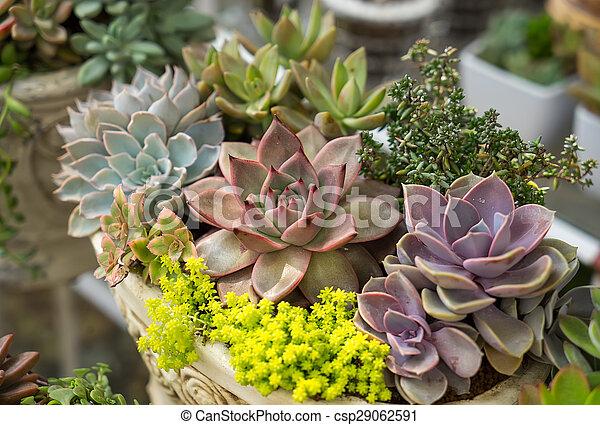 rośliny, miniatura, soczysty - csp29062591