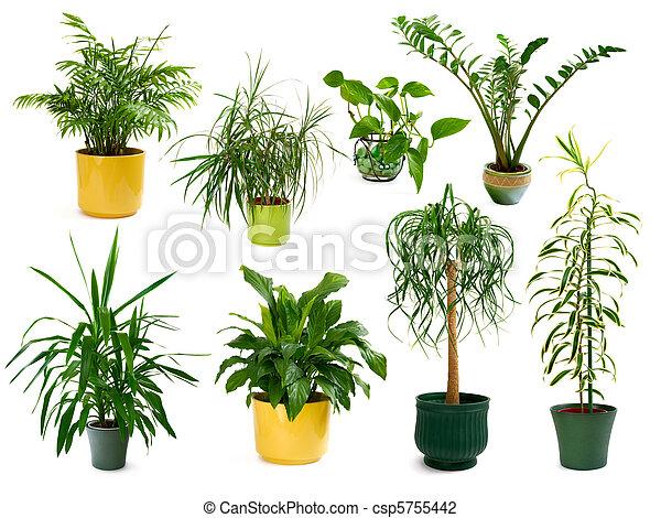 rośliny, osiem, różny, komplet, domowy - csp5755442