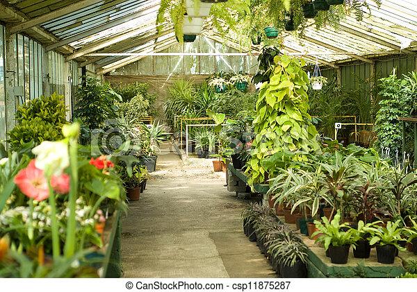 rośliny, pokój dziecinny, szklarnia, prospekt - csp11875287