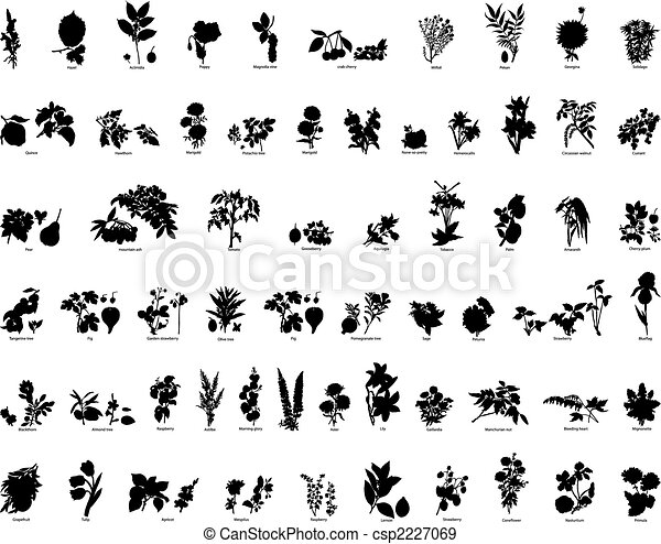 rośliny - csp2227069