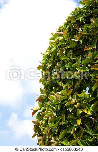 rośliny - csp5863240