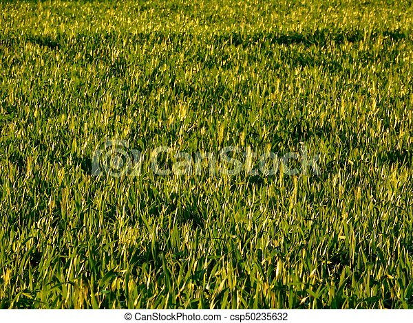 rośliny - csp50235632