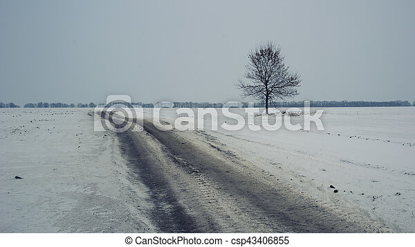 Road and lonely tree in gloomy winter - csp43406855
