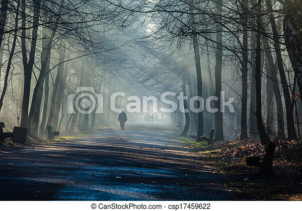 Road and sunbeams in strong fog in the forest, Poland. - csp17459622