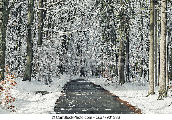 Road in a forest on a winter day - csp77901336