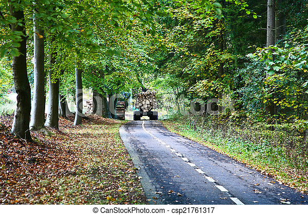 Road in a forest - csp21761317