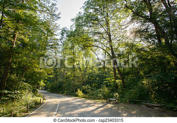 road in a forest - csp23403315