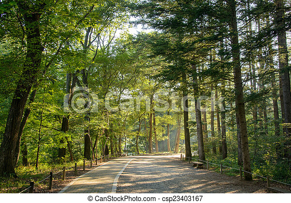 road in a forest - csp23403167