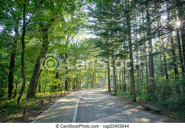 road in a forest - csp23403644