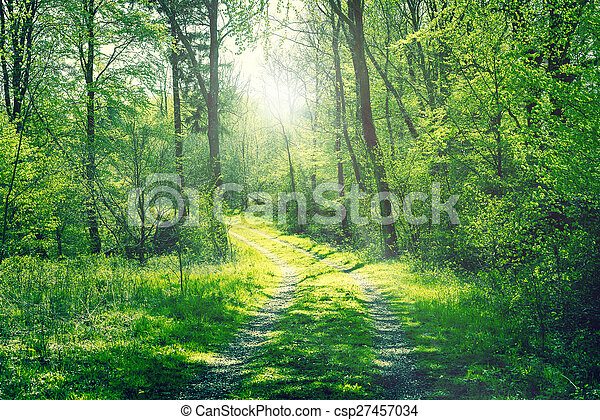 Road in a green forest with sunshine - csp27457034