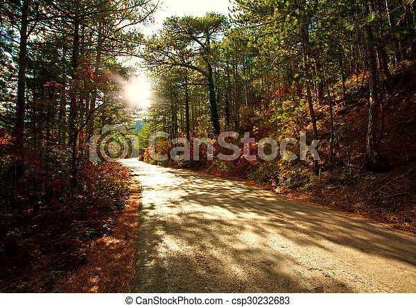 Road in autumn forest in light of the setting sun - csp30232683