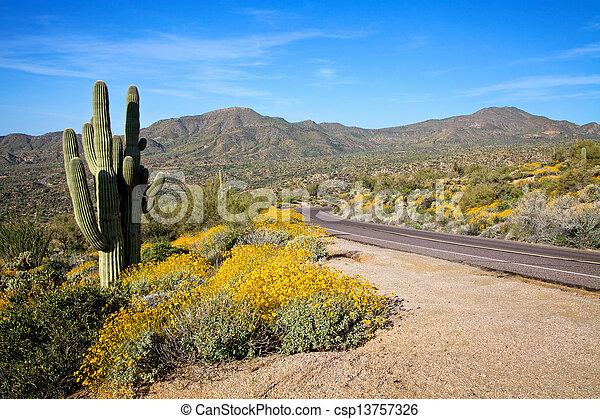 Road in Desert in Spring - csp13757326